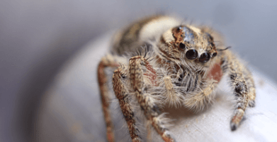 How Long Do Spiders Live – Exploring the Spider Life Cycle