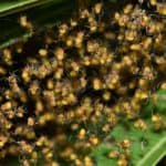 baby spiders spiderlings