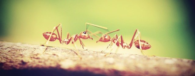 Types of Ants: How to Identify Common House Ants