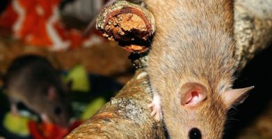 Can Mice Climb & Where Exactly Can They Fit & Go?