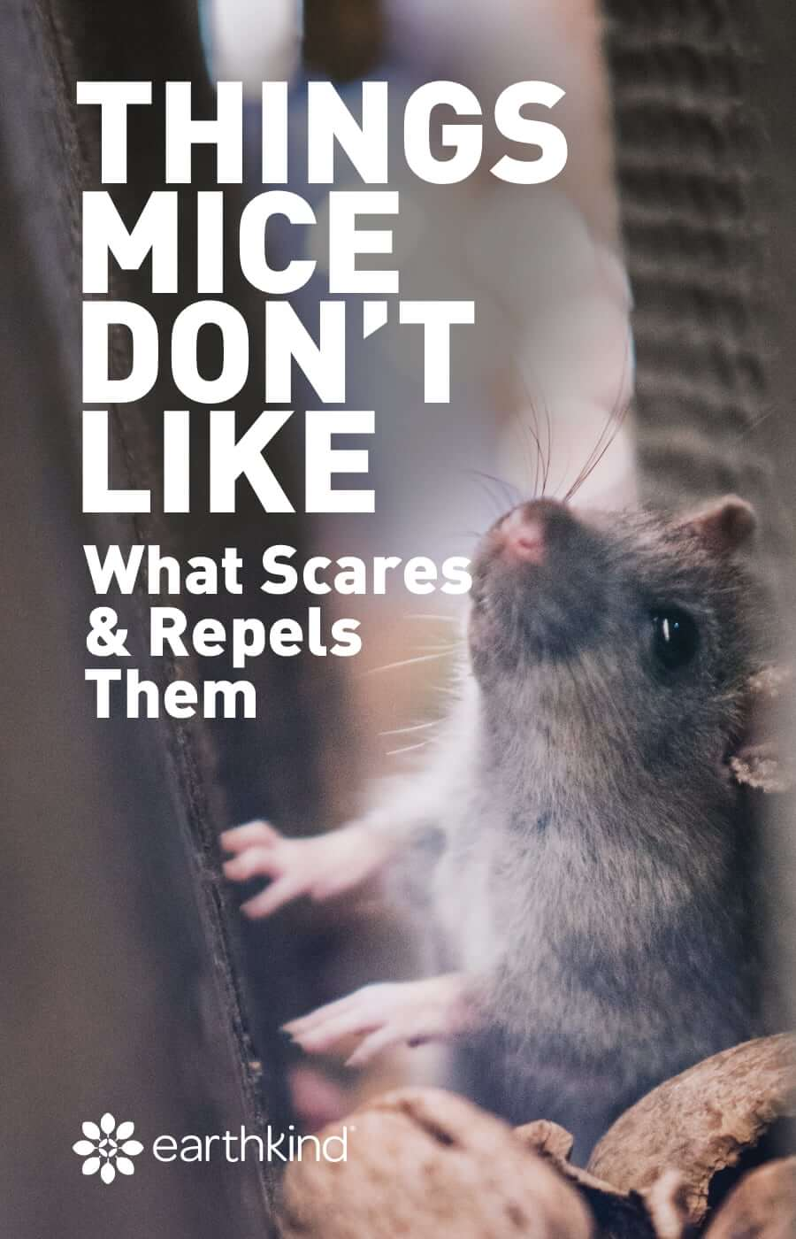 Things Mice Don't Like - What Scares Mice & Repels Them