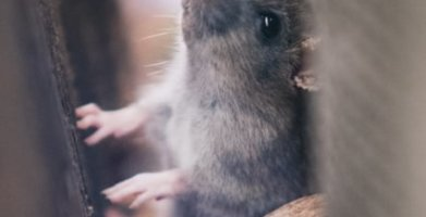 Things Mice Don't Like – What Scares & Repels Them