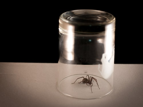 spider in cup