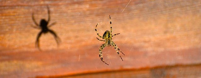 Do Spiders Bite? Identifying & Treating Spider Bites
