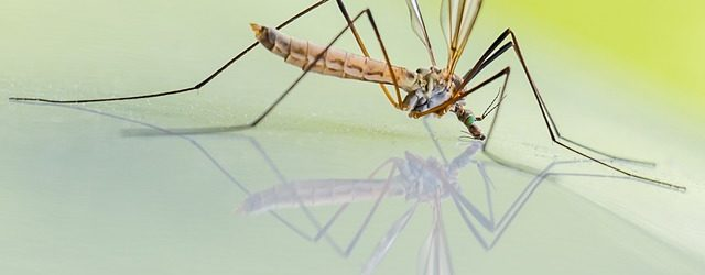 Mosquito Life Cycle & Lifespan – Exploring the Stages