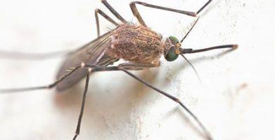 5 Tips for West Nile Virus Prevention