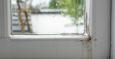 Pest Prevention and Control During Hurricane Season