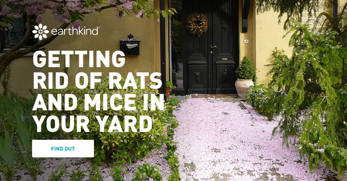Getting Rid of Rats and Mice in Your Yard | Earthkind