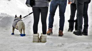 friends walking dog outside