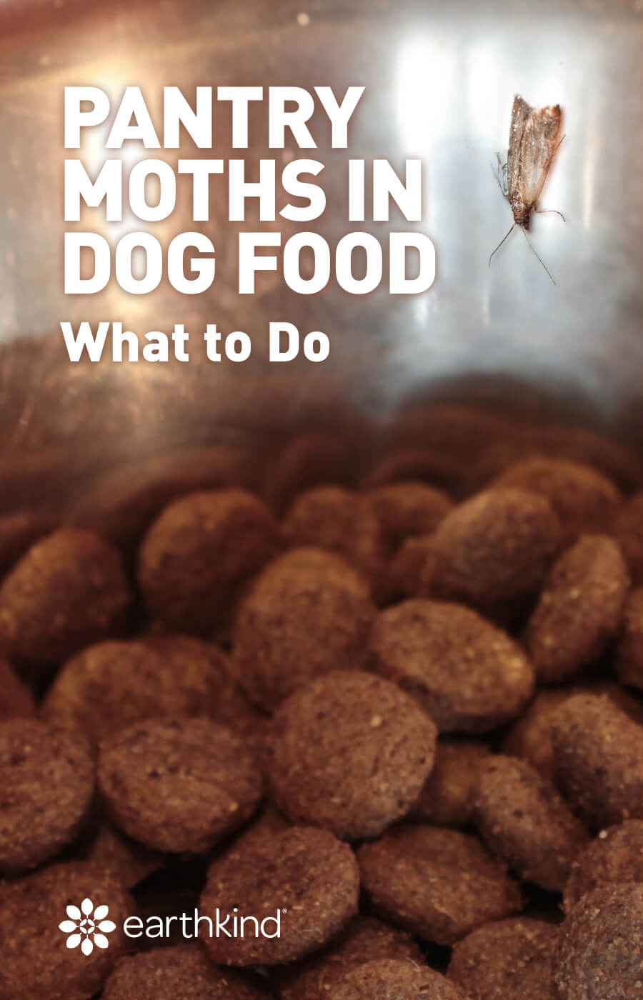 What to do about pantry moths in dog food and other pet food?