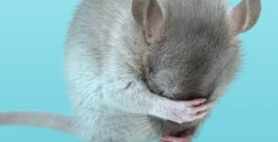Are Mice Nocturnal? The Sleeping Habits of a Mouse