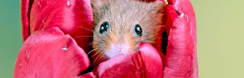 Most Loved Tips for Getting Rid of Mice