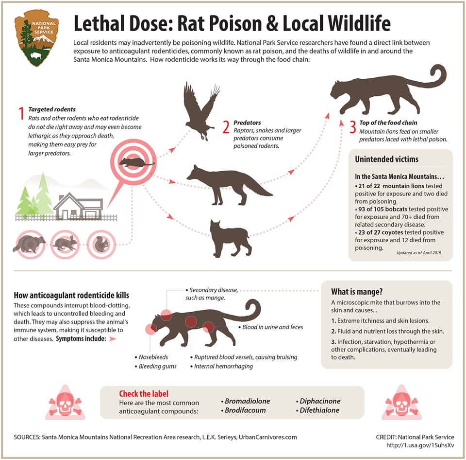 A chart exploring how rodenticide makes it's way up the food chain, damaging the ecosystem.