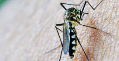5 Tips for West Nile Virus Prevention