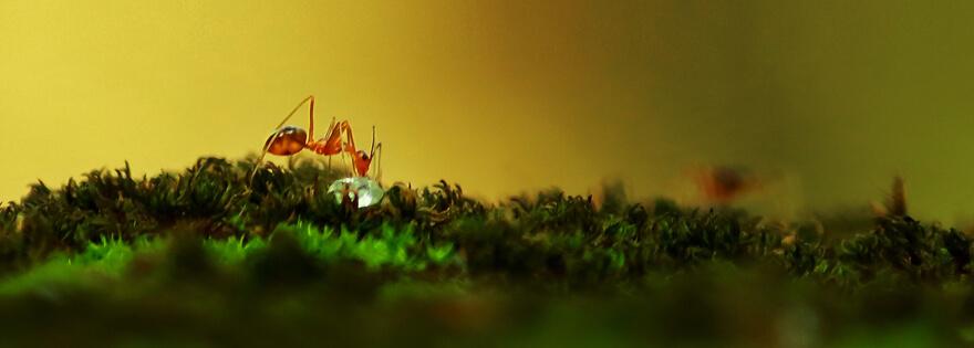 donde viven las hormigas