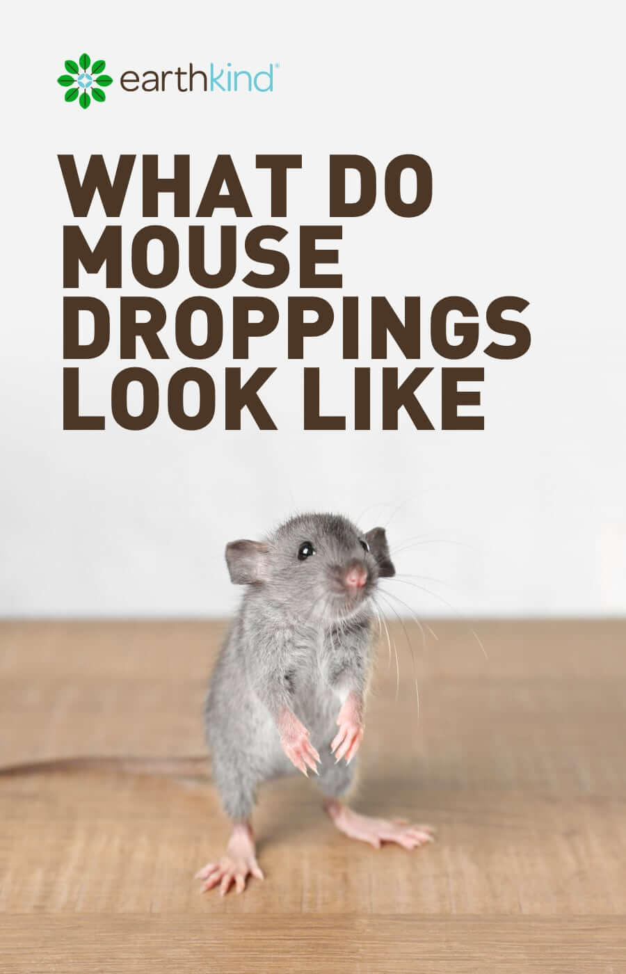 What Do Mouse Droppings Look Like & How to Get Ride of Mice