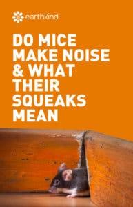 ek-mice-sounds-pinterest