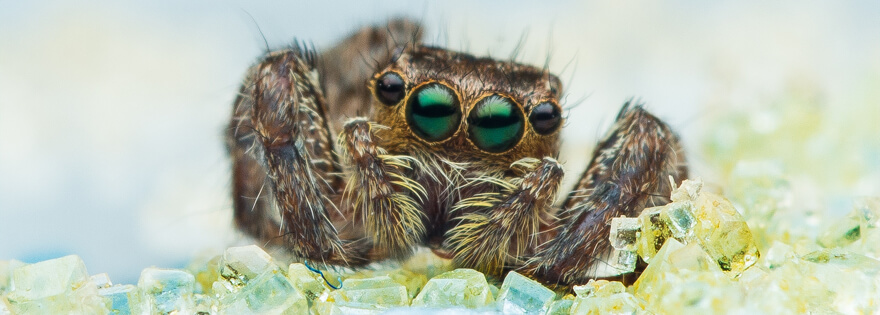Wondrous What Do Spiders Eat The Diet Of A Common House Spider Beutiful Home Inspiration Semekurdistantinfo