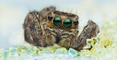 What do Spiders Eat – The Diet of a Common House Spider
