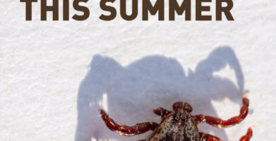 Tick Prevention Tips to Stress Less this Summer