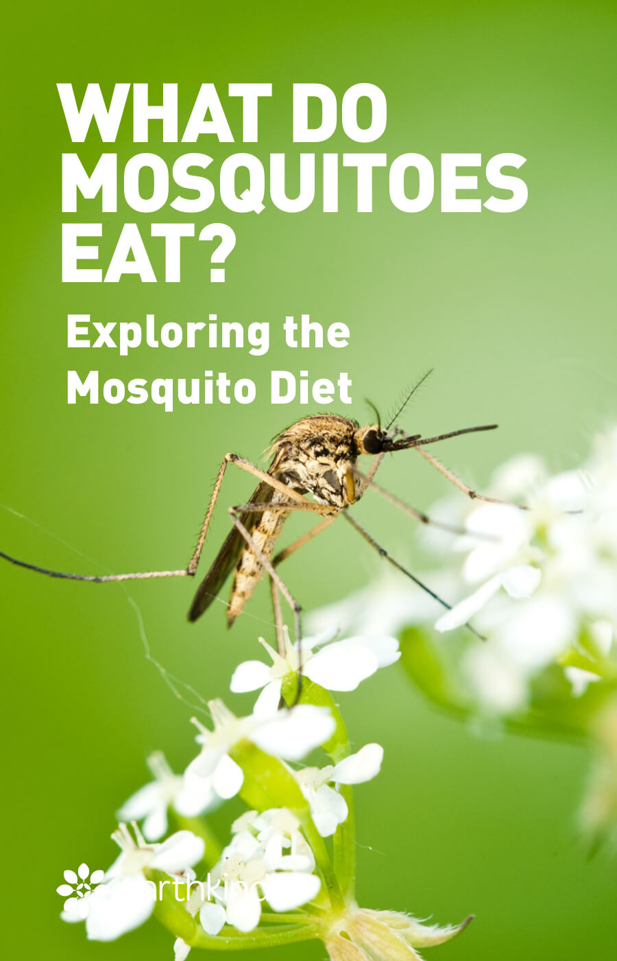 What Do Mosquitoes Eat Exploring The Mosquito Diet Earthkind