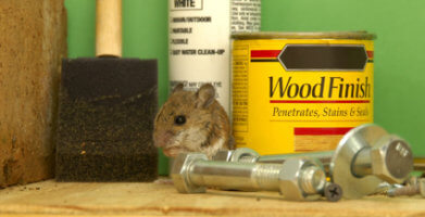 Mouse-Proof Your Garage