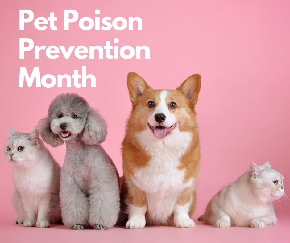 5 Useful Tips From Experts In Pet Poison Prevention