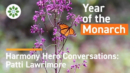 Harmony Hero Conversations Patti Lawrimore