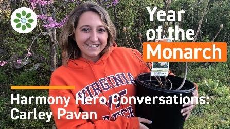 Harmony Hero Conversations Carley Pavan